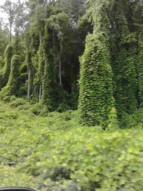 Зеленые колонны сказочного лесного замка