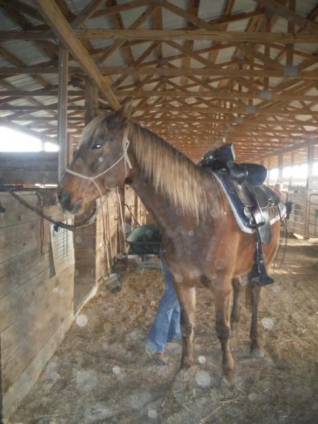 Лошадь - друг человека